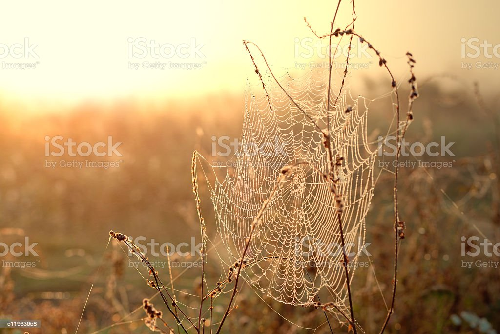 Spiderweb with dew drops at sunrise stock photo