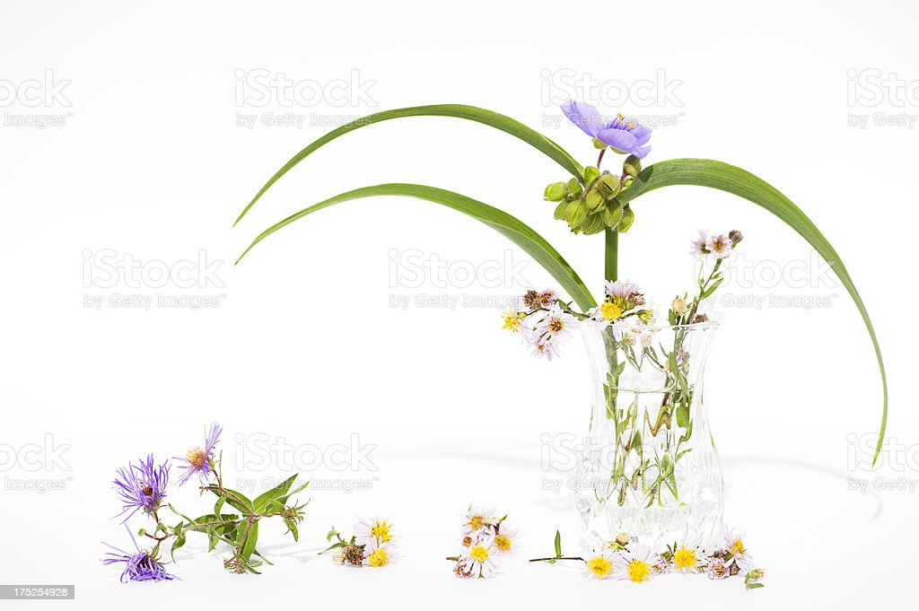 Spiderwort and Friends royalty-free stock photo
