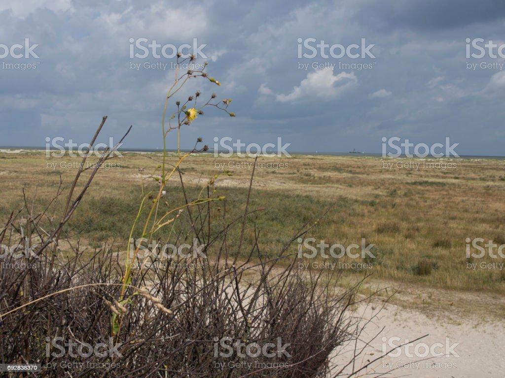 spiekeroog in germany stock photo