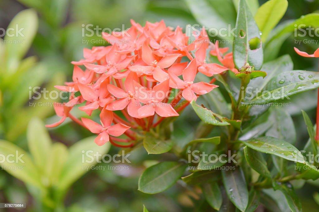spike flower stock photo