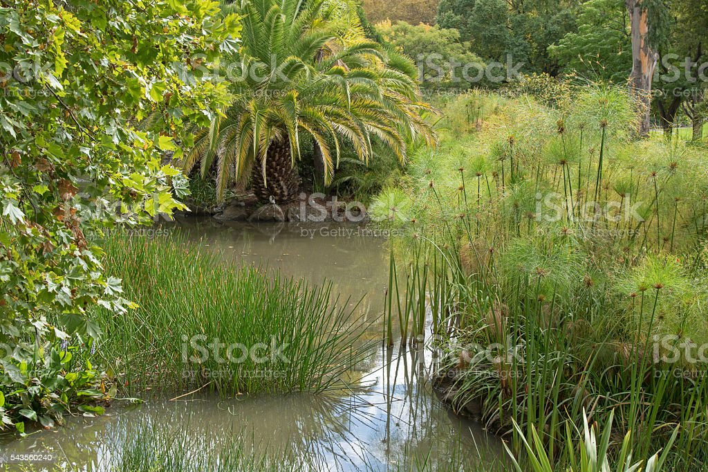 Spike rush, Cyperus papyrus, pickerelweed, and other aquatic plants stock photo