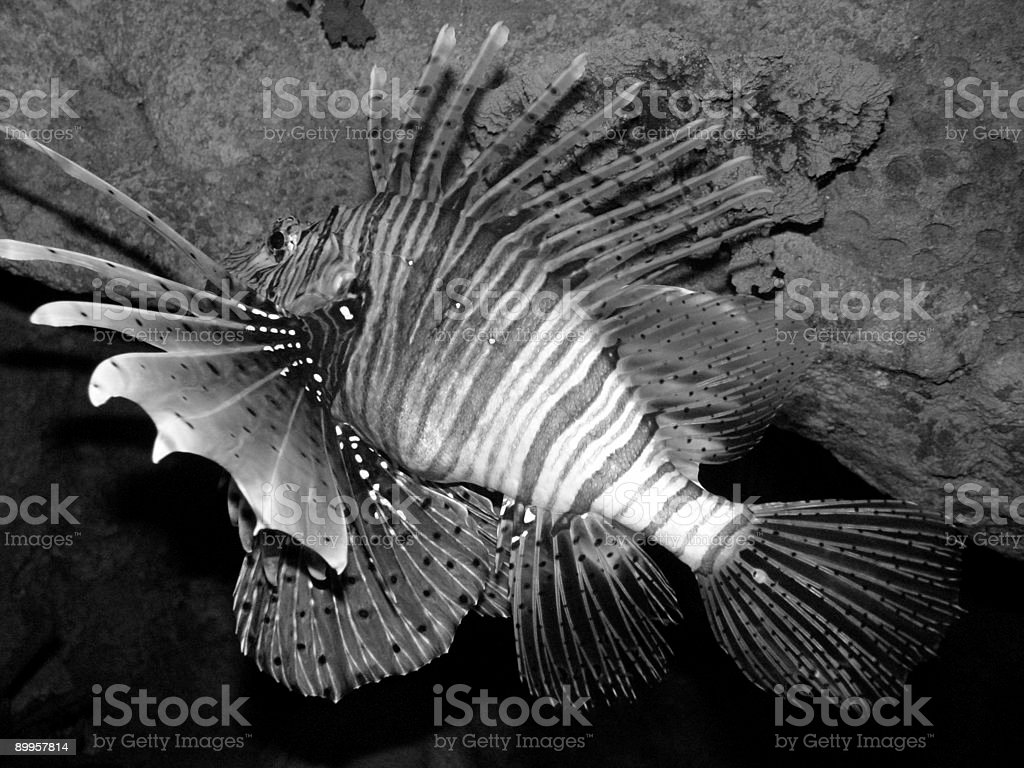 Spiked Fish stock photo
