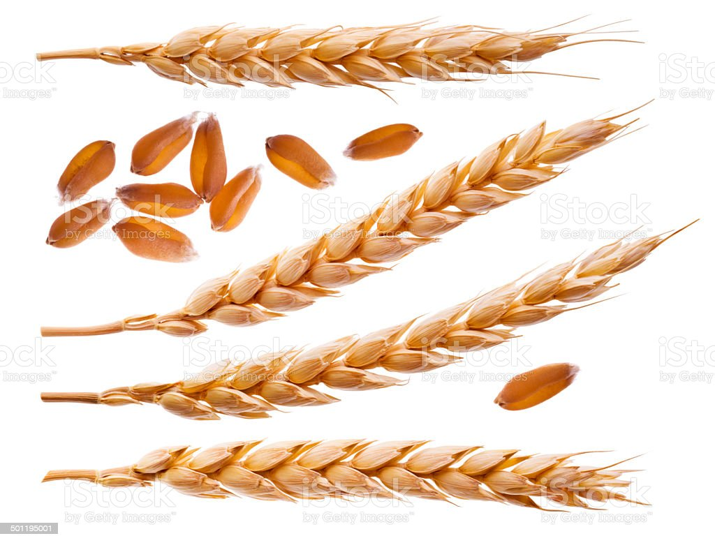 Spikelets and wheat seeds isolated on white stock photo