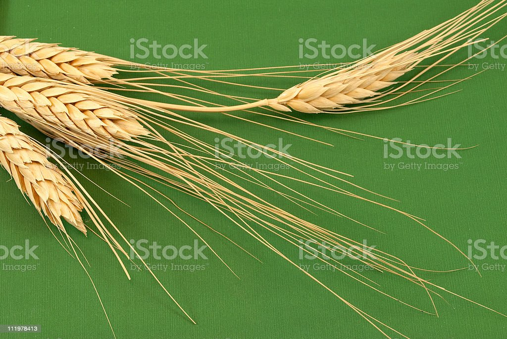 spikes royalty-free stock photo