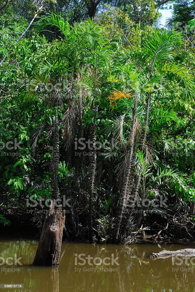 Spikey Palms Sticking Out of the Water stock photo