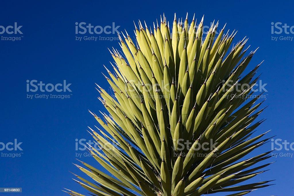 Spiky Cactus detail-blue sky stock photo