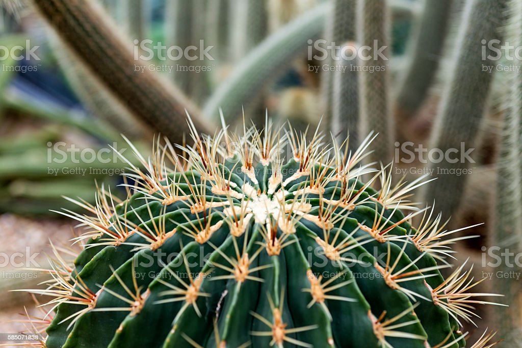 Spiky cactus stock photo