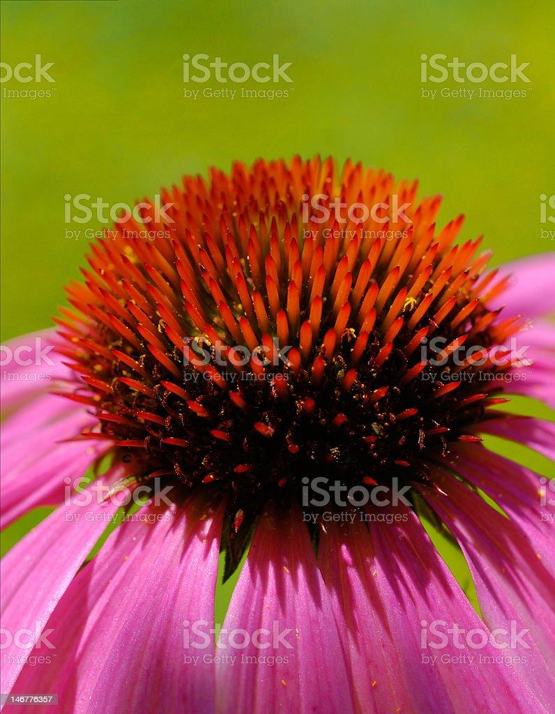 Spiky heart royalty-free stock photo