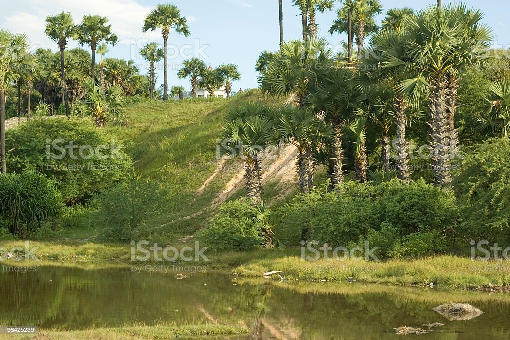 Spiky lontar palms in West Timor stock photo