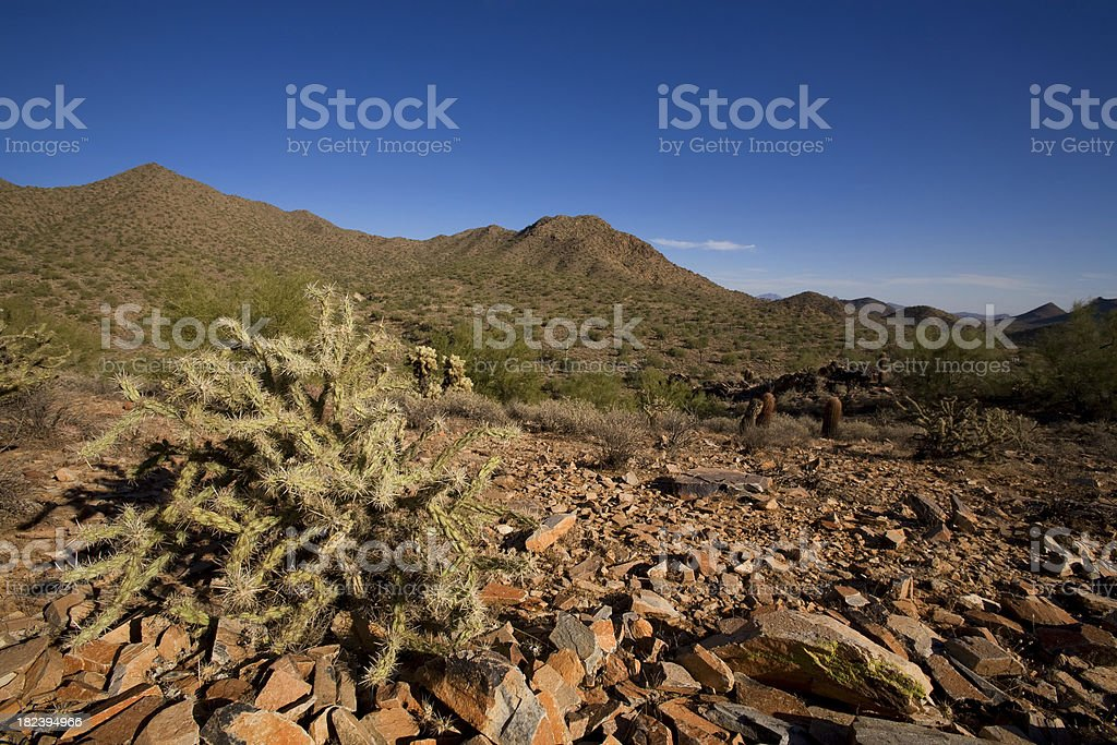 Spiky one royalty-free stock photo