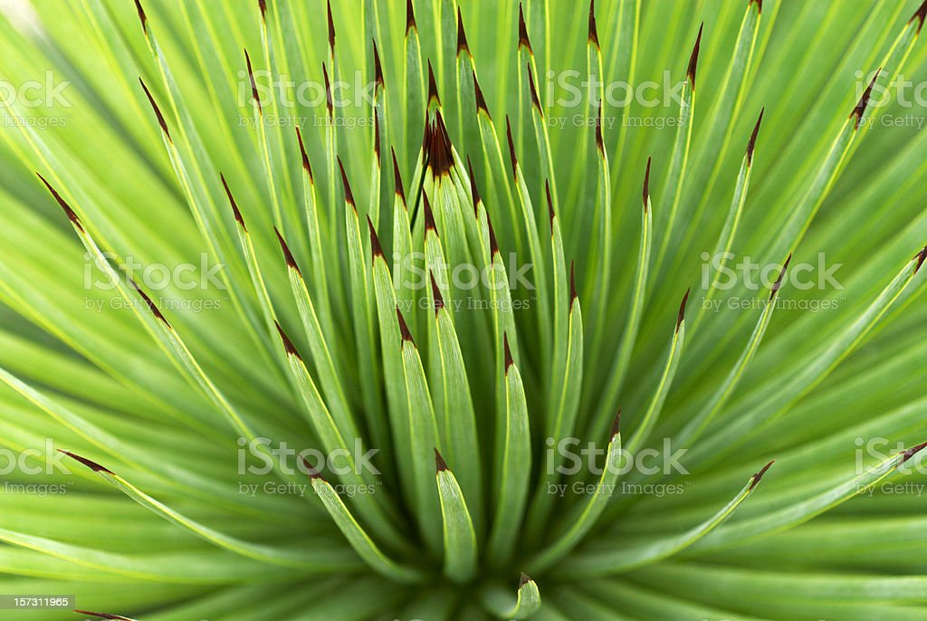 Spiky Plant royalty-free stock photo