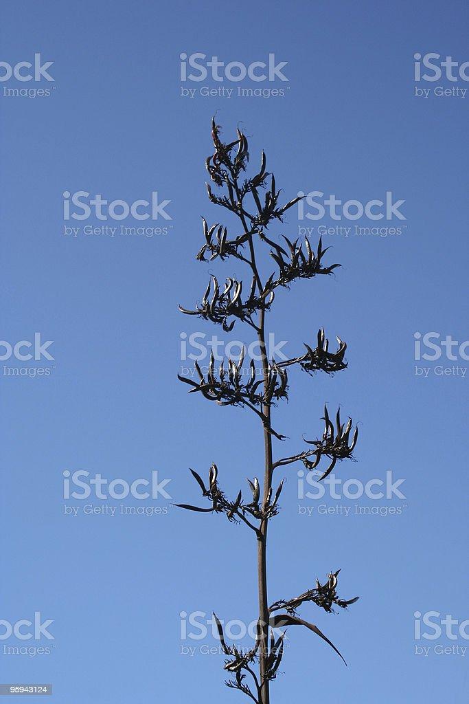 Usine Spiky photo libre de droits