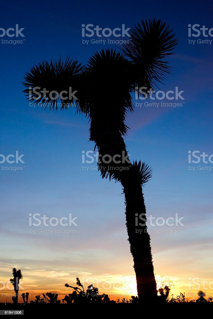 Spiky Tree Silhouette at Sunset stock photo