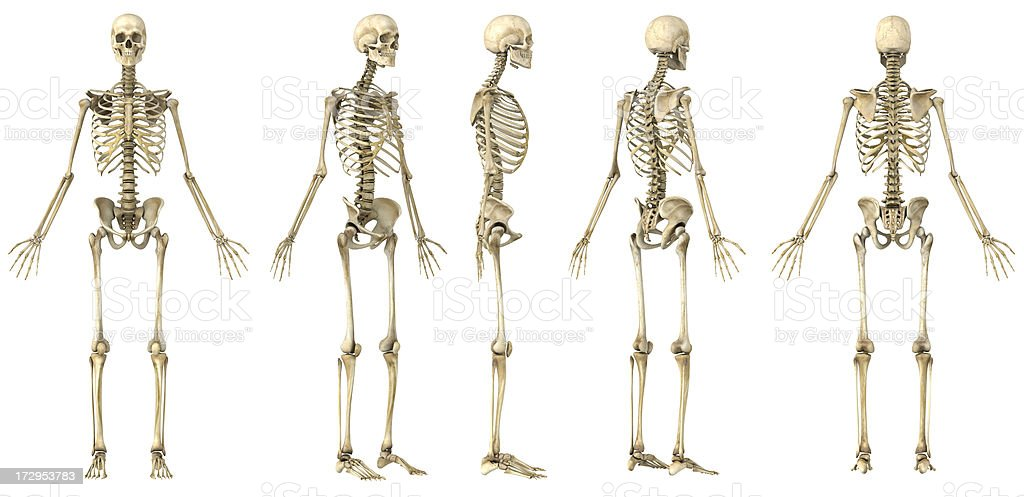 Spin of a human skeleton stock photo