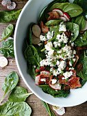 Spinach blue cheese salad with chives, radish, crumbled turkey bacon