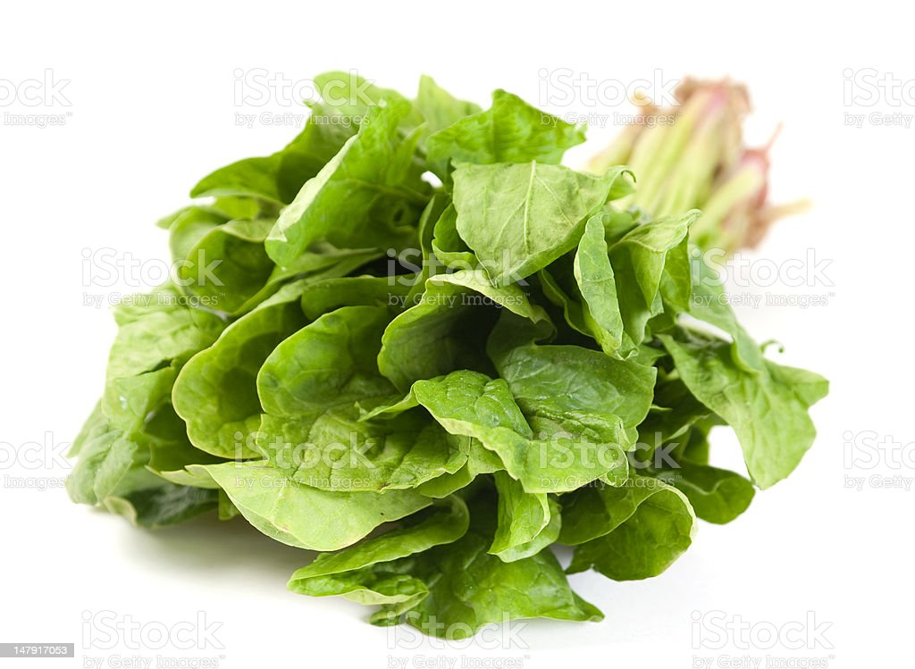 Spinach fresh herb royalty-free stock photo