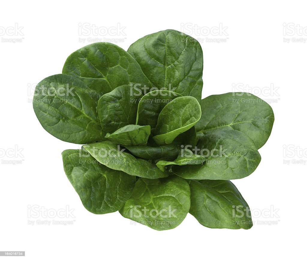 Spinach Isolated stock photo