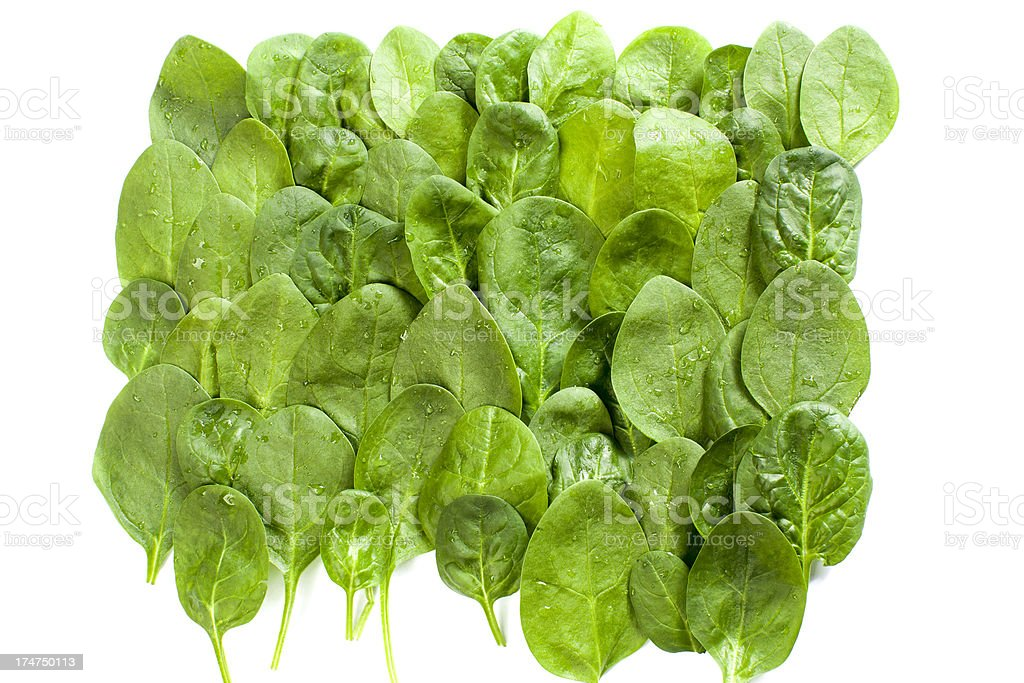 Spinach . royalty-free stock photo