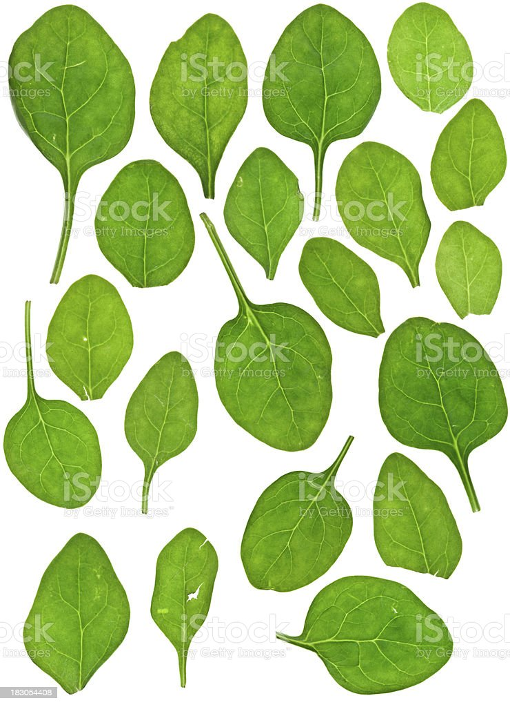 Spinach Samples royalty-free stock photo