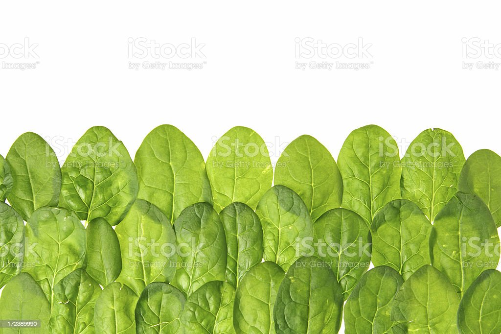 Spinach series royalty-free stock photo