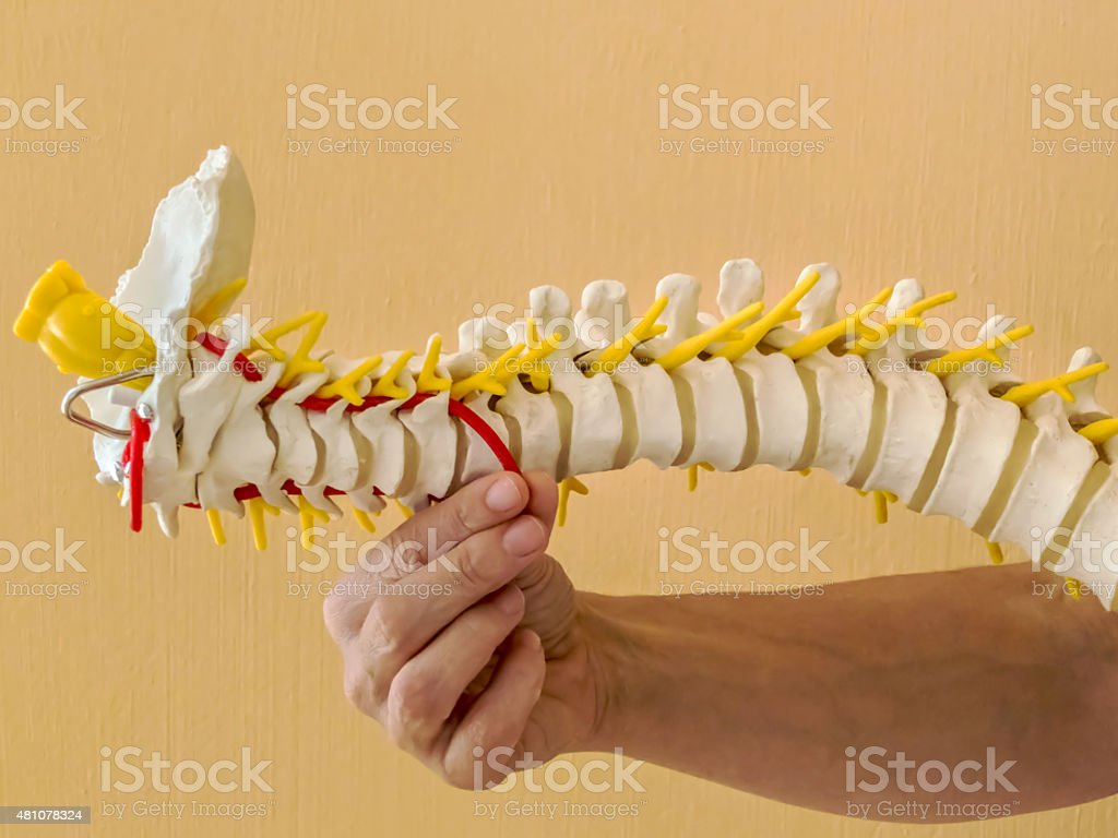 Spinal Column stock photo