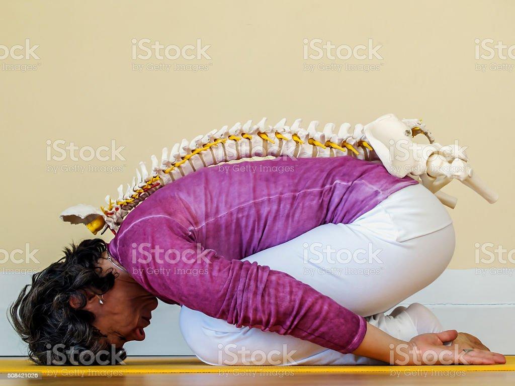 Spinal Column stock photo