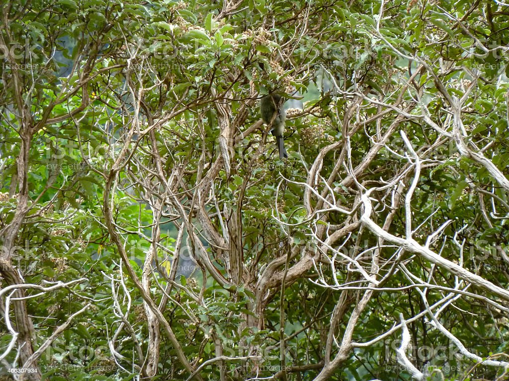 Spindly Branches stock photo