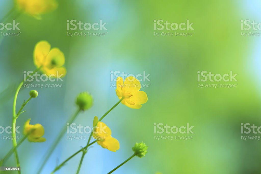 Sping Meadow - Yellow Flowers Looking Up stock photo