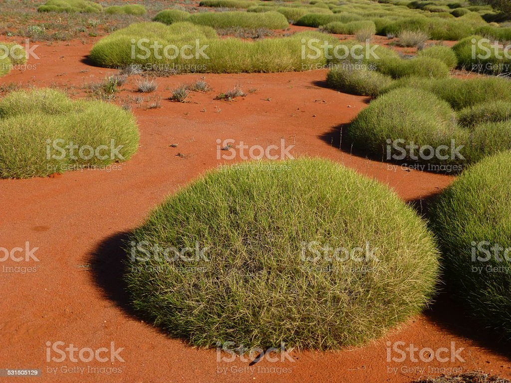 spinifex stock photo