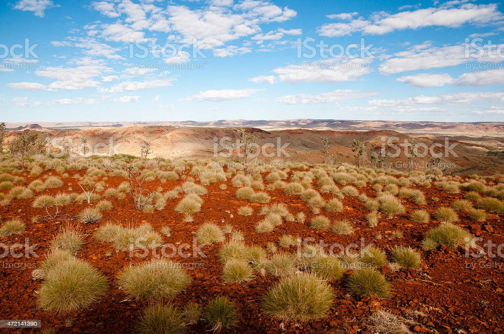 Spinifex Plants - Australian Outback stock photo