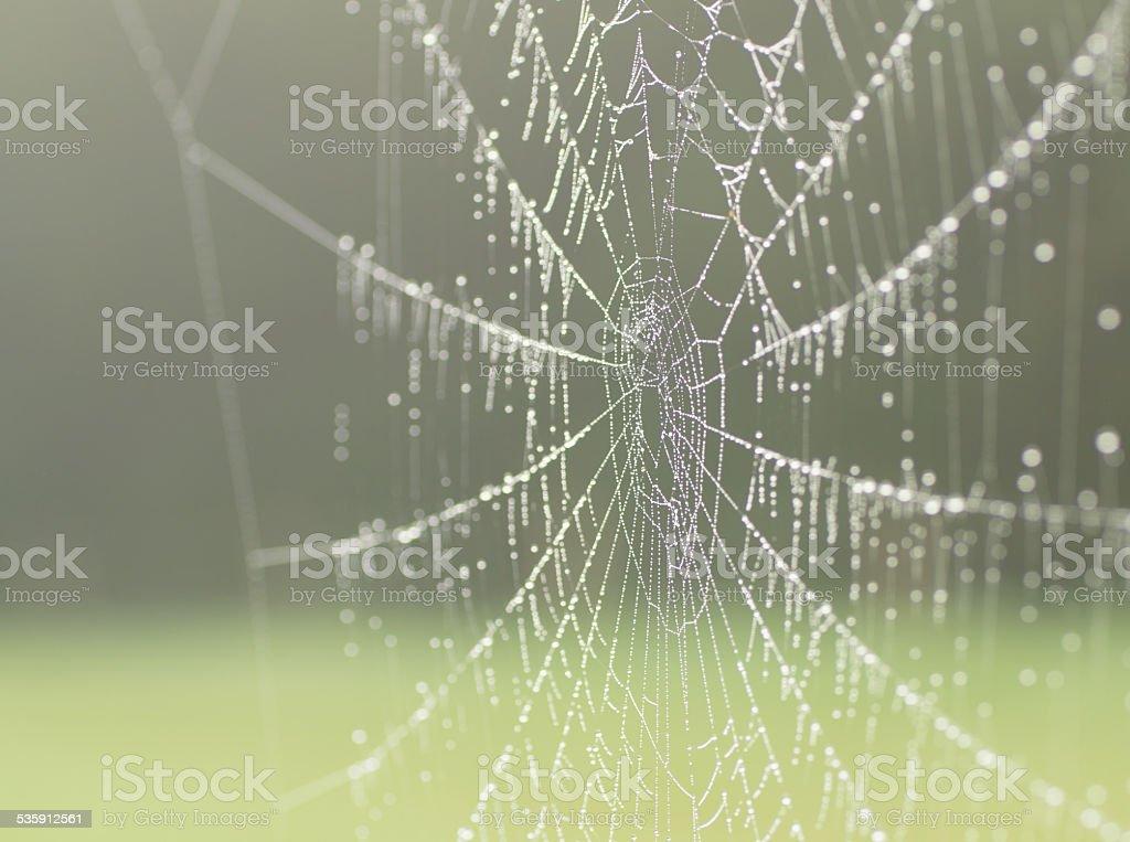 Spinnennetz stock photo