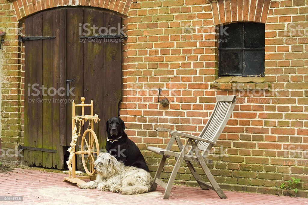spinning wheel with two dogs stock photo