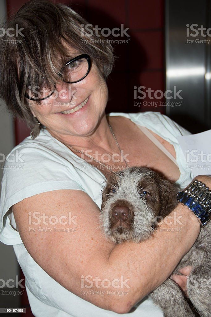 Spinone Italiano puppy with senior adult 2 stock photo