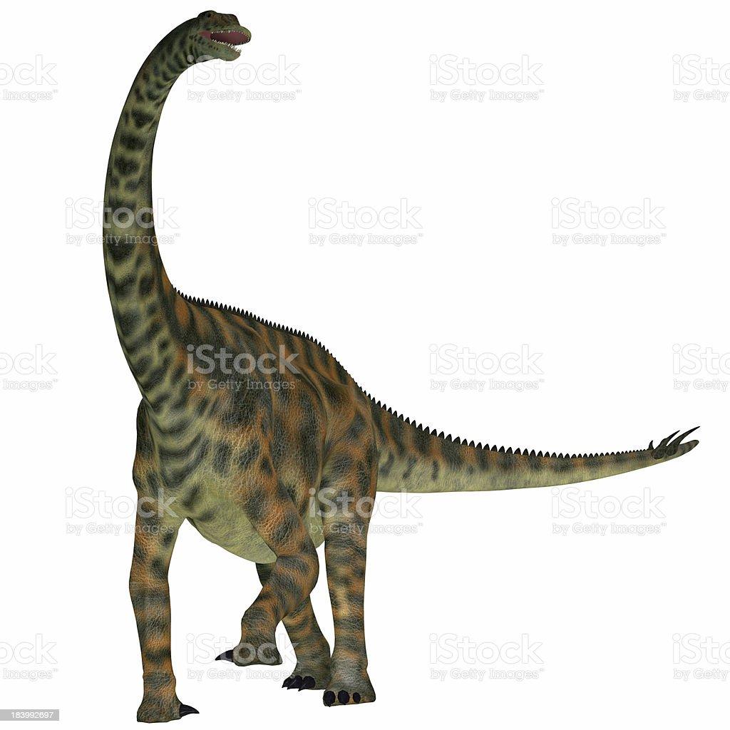 Spinophorosaurus on White stock photo