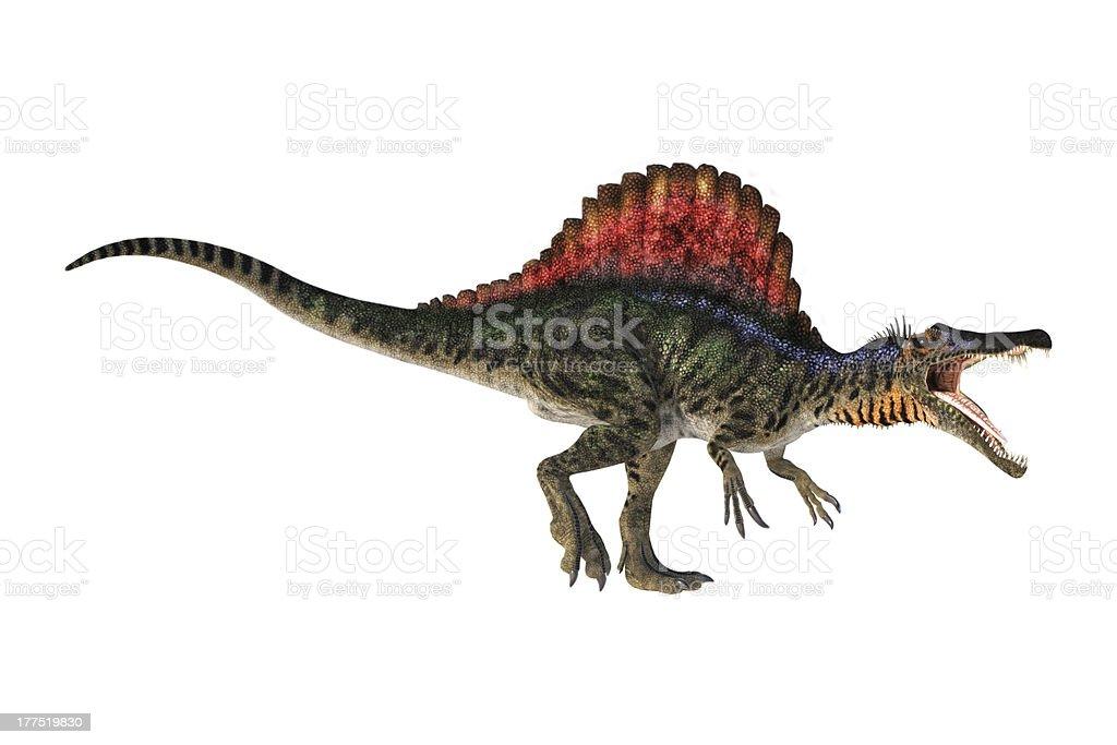 Spinosaurus on White Background royalty-free stock photo