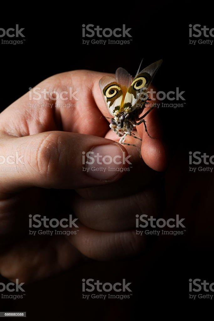 Spiny flower mantis on hand black background stock photo