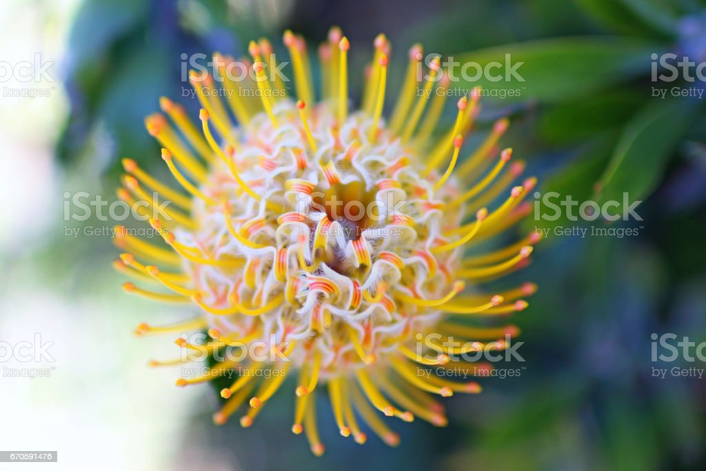 Spiral flower close up stock photo
