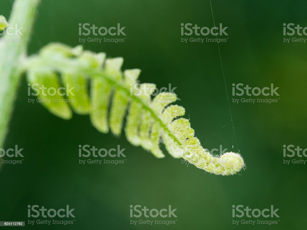 Spiral Leaves of Golden Moss stock photo