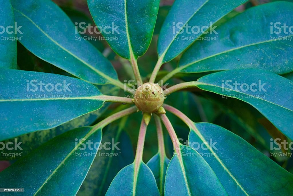 Spiral Leaves stock photo