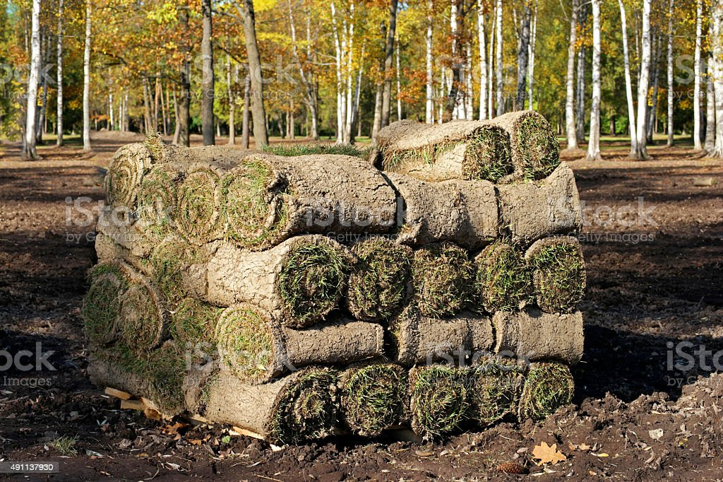 Spiral of fresh rolled grass turf stock photo