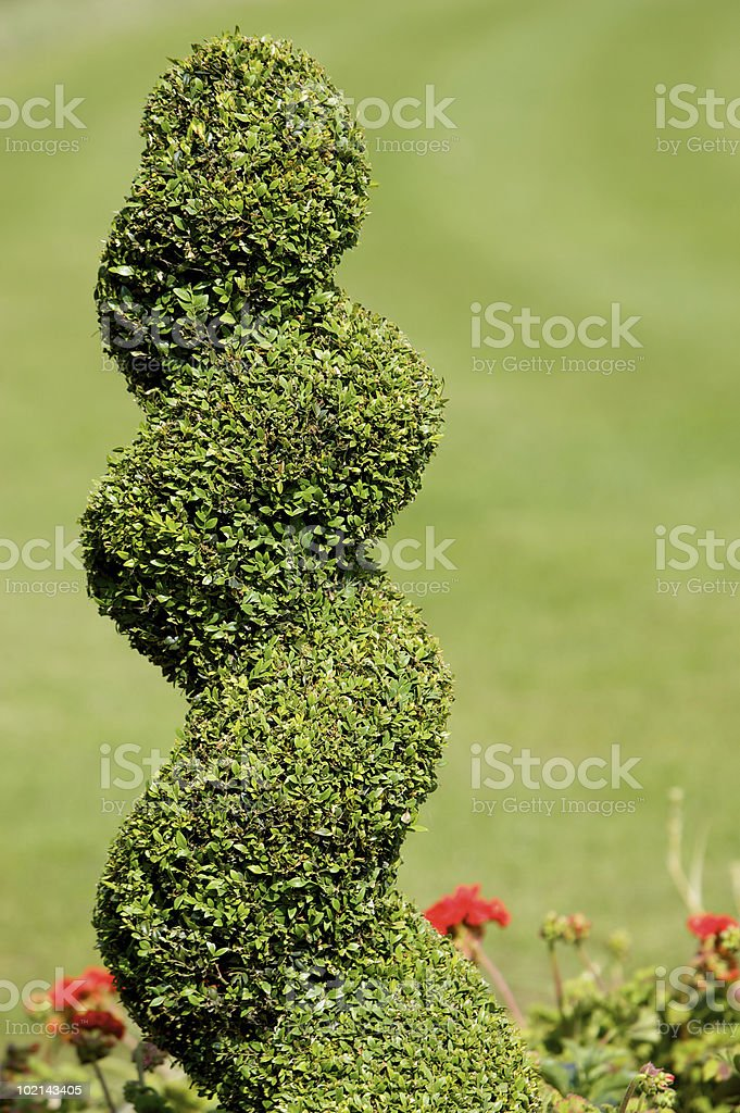 Spiral Topiary royalty-free stock photo