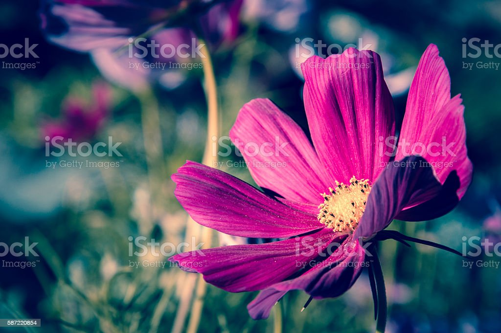 Spirit of summer stock photo