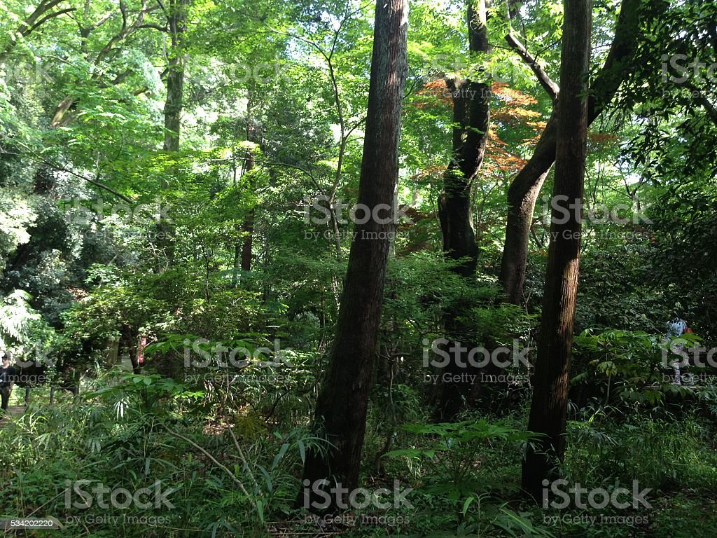 spirits of the forest royalty-free stock photo