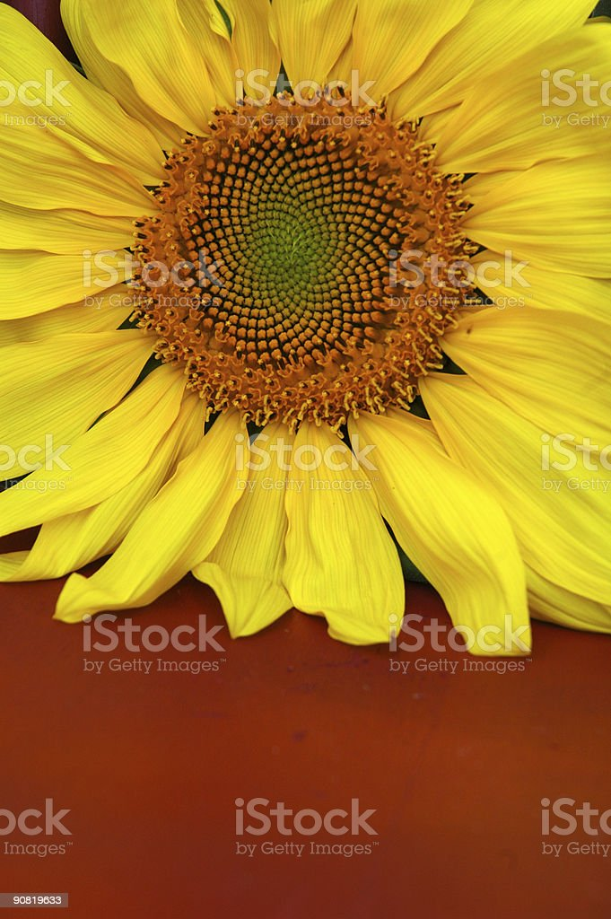 Spirographic Flower stock photo