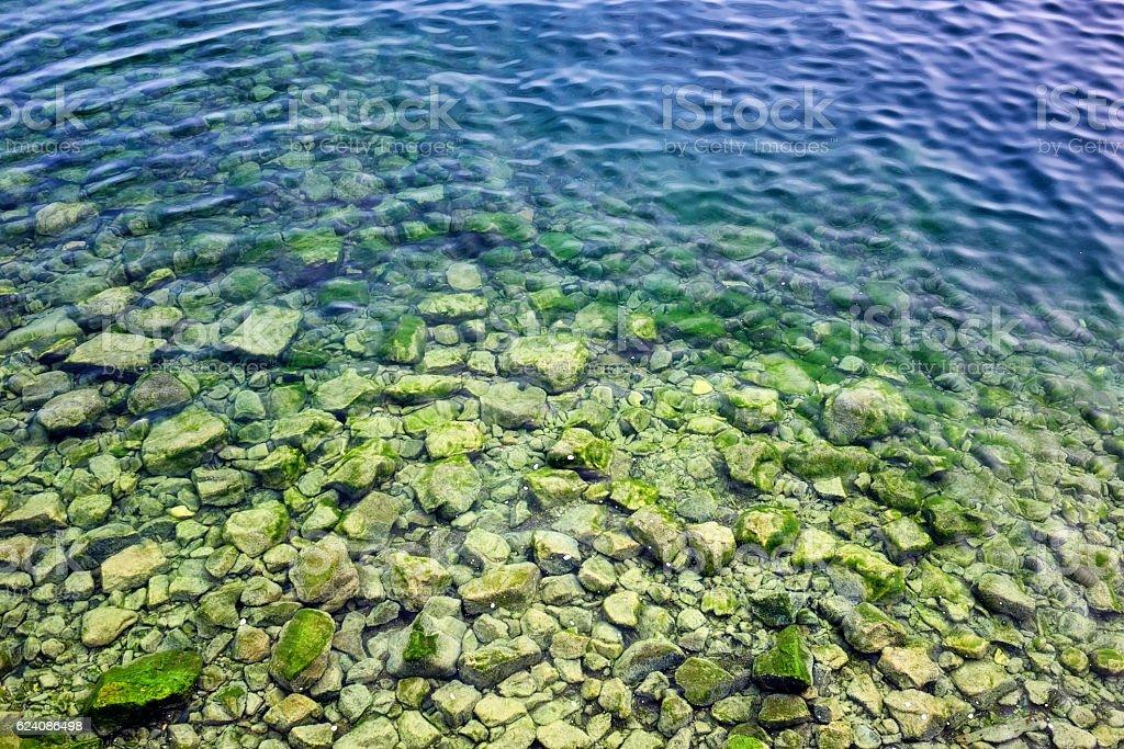 Spirogyra in bottom rocks in water of Lake Baikal stock photo