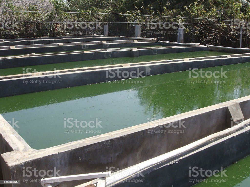 Spirulina farm stock photo