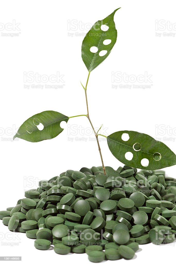 spirulina tablets and green plant royalty-free stock photo