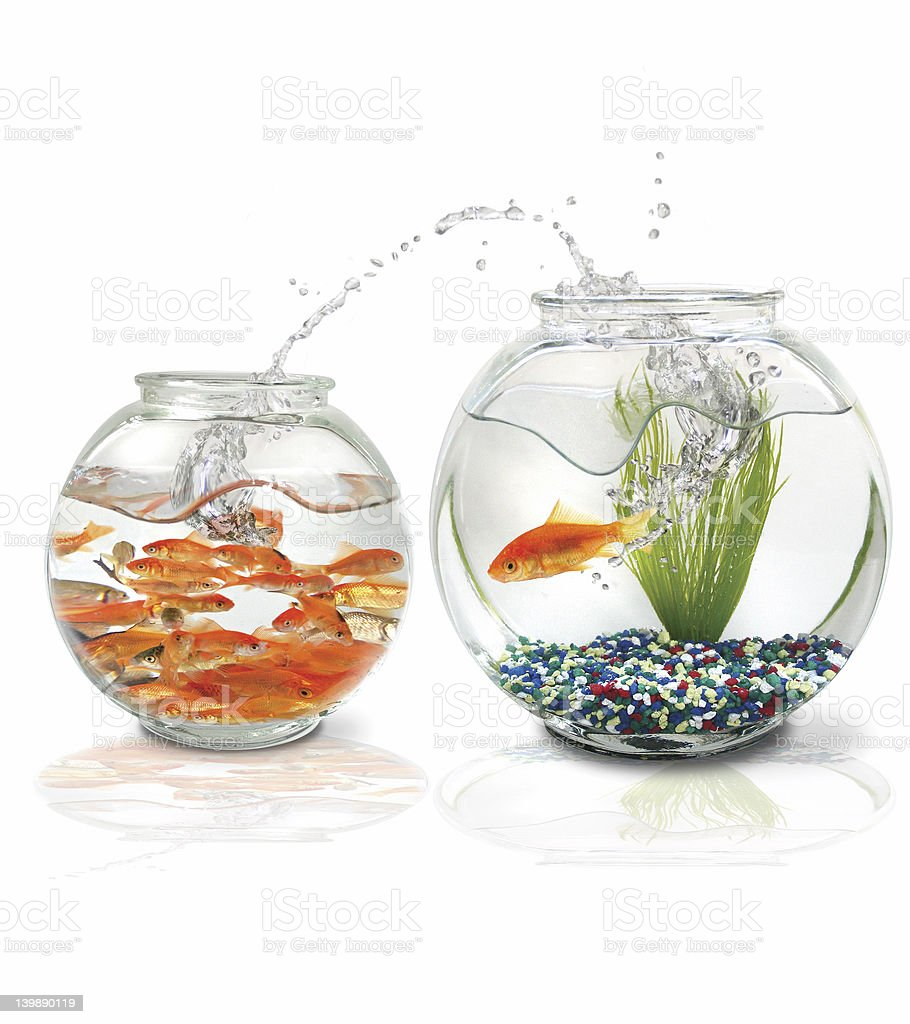 Splash! Fish jumps to a better home stock photo