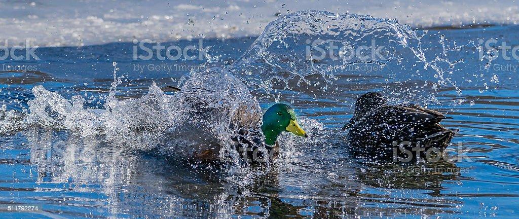 Splash Landing stock photo