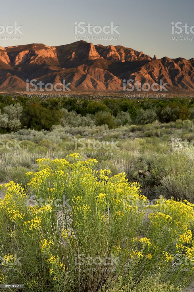 Splash of Yellow royalty-free stock photo